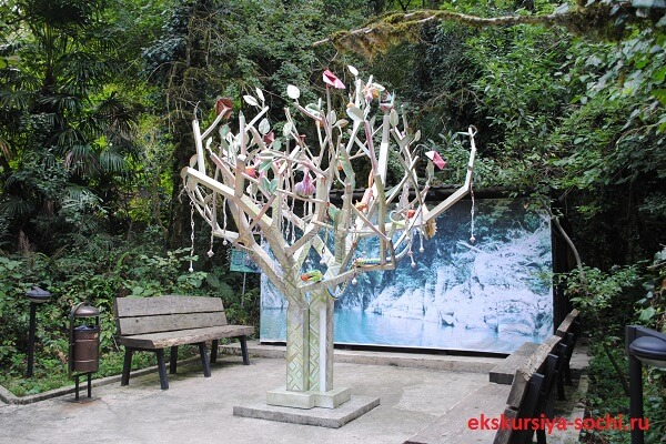Дерево желаний в самшитовой роще