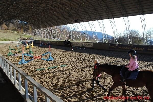 Катание на элитных лошадях