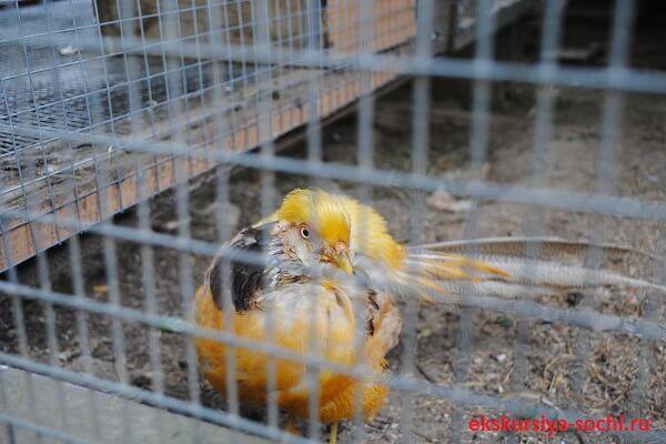 Причудливая птица на территории монастыря