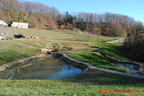 Территория фермы искусственные пруды