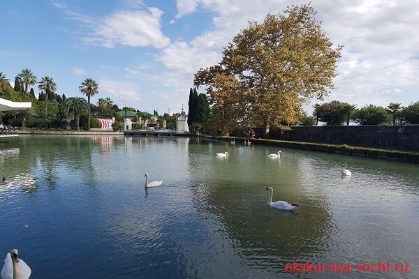 Новый Афон лебединое озеро